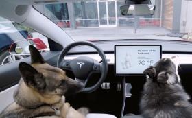 """Tesla пуска """"Кучешки режим"""", за да защити домашните любимци от прегряване в паркирани коли"""