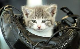 Коте оцелява след 500-километрово возене в автомобилна броня. Излиза на корицата на календара на Кралските военновъздушни сили