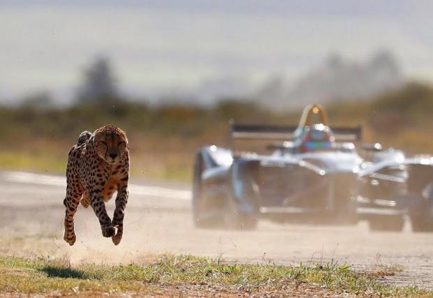 10. Забрана за състезаване с животни в Канада: Виждате лос или мечка, които тичат успоредно на колата ви край пътя - не се състезавайте с тях или книжката ви ще бъде отнета...
