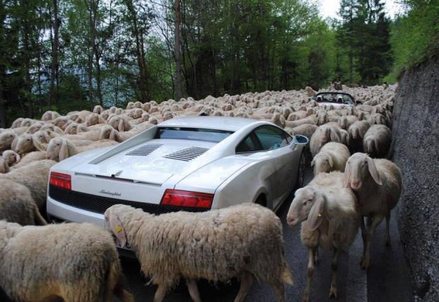 3. В Австралия е забранено да махате на животни, които пресичат пътя на колата ви. Да, трябва да ги оставите сами да минат, не може да ги притеснявате по никакъв начин. Добре че там няма много магарета.