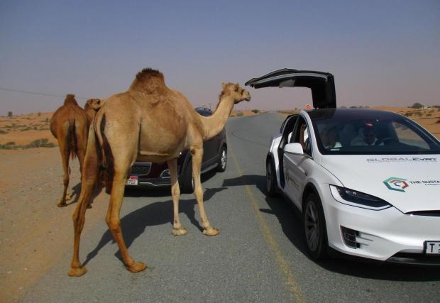 9. Забрана за яздене на камила по магистралите в Невада, САЩ: Обърнете внимание, в Щатите е позволено да яздите камила по второстопенни пътища, но не и по магистралите в Невада. В случай, че обмисляте Route 66 - също е позволен с камила!