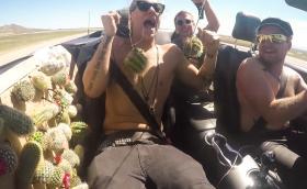 Какво става, когато напълниш Mustang с кактуси и сложиш двама идиоти вътре. Видео и галерия