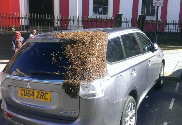 Рояк пчели преследва кола два дни, за да спаси царицата си