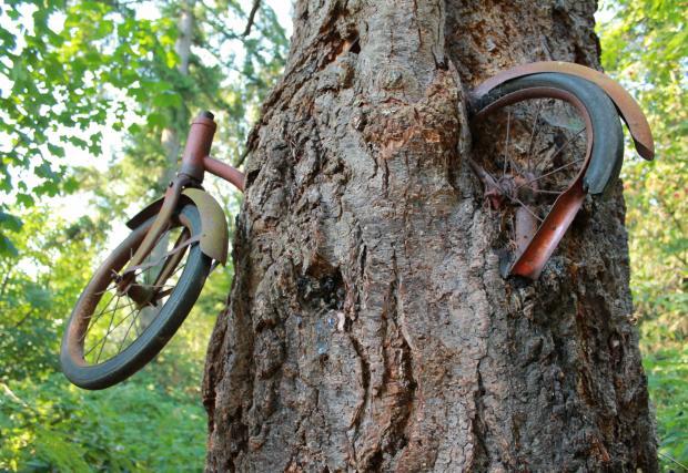 Истинската история за дървото, което изяде колелото. Виждали сте снимките десетки пъти, но не знаете истинската история. Ето я и нея