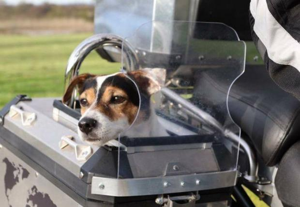 Запознайте се със Скипър, най-авантюристичното куче на света