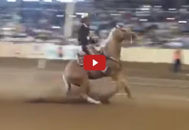 Мощност: един кон. ABS: не. Или как спира един жребец. Забавно видео