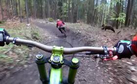 Камера засне мечка, гонеща колоездач. Имаме видеото!